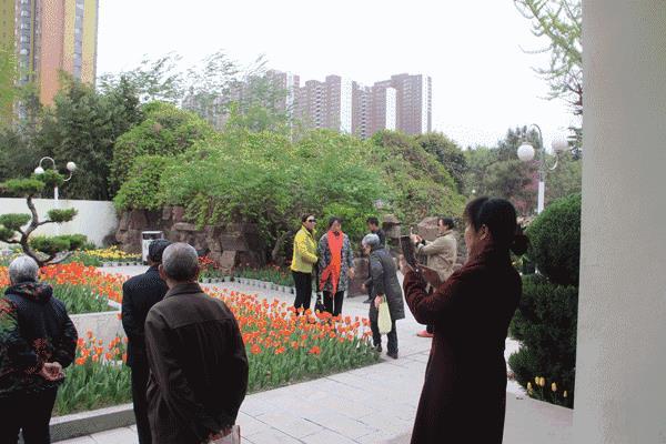【高清大图】安阳人民公园郁金香花展今日开园!小编带您抢先看~